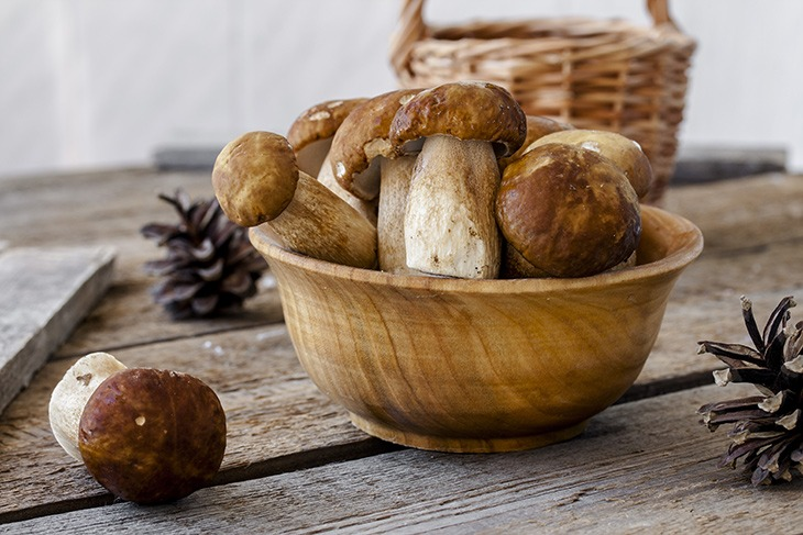 can you eat mushrooms while pregnant important when chosse