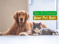 Tips To Control Your Pet Hair